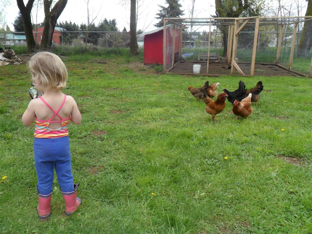Chicken farmers letting the chickens out to play.