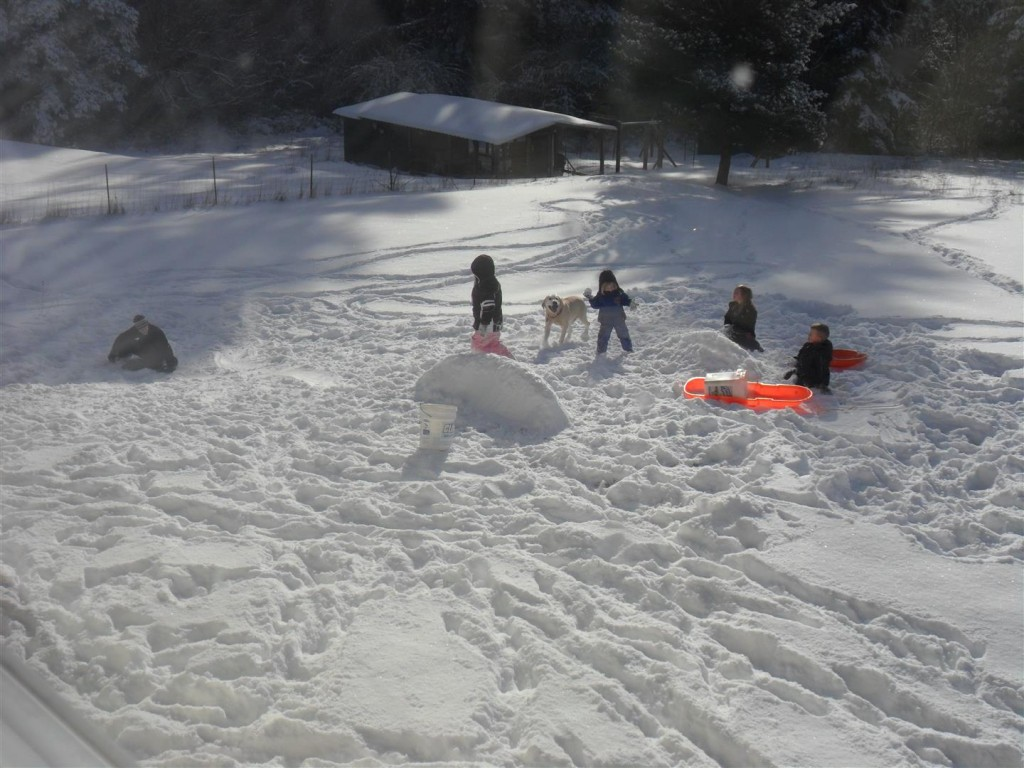 Building snow forts and sledding!