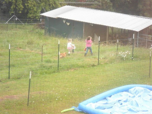 Anna is amazing.  Here she decided to help both little sisters go down to the coop with her to hold chicks and get eggs.