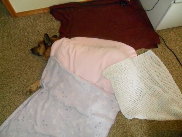 Carolyn put all her special blankies on Rose. Rosie is such a sweet old doggie.