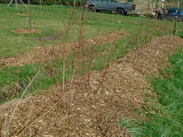 Fresh mulch is so pretty against spring grass.
