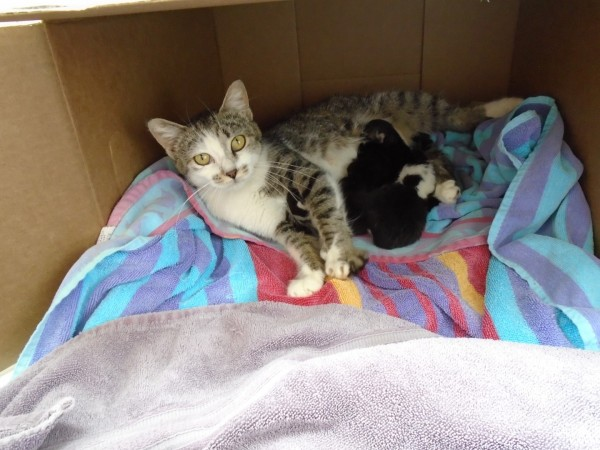 Here is the first batch of kittens we've fostered and their sweet mama.