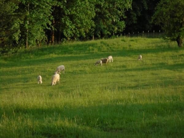 The back pasture.