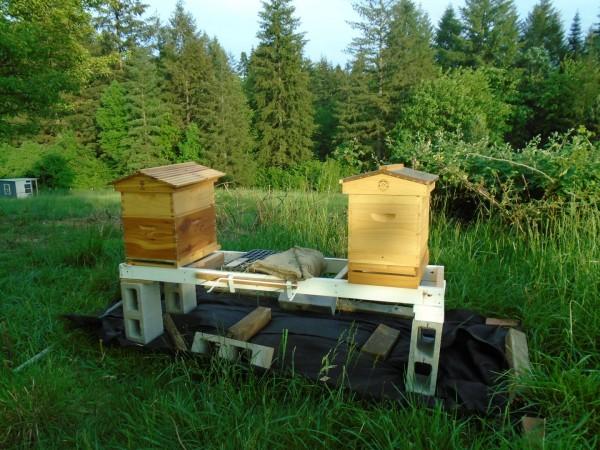 Empty hives