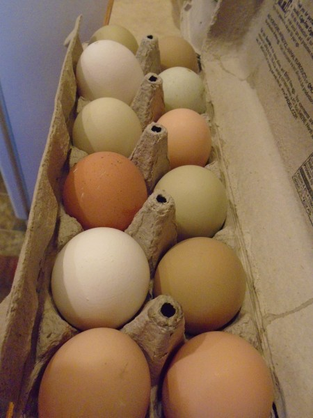 I enjoy our colorful chicken eggs.