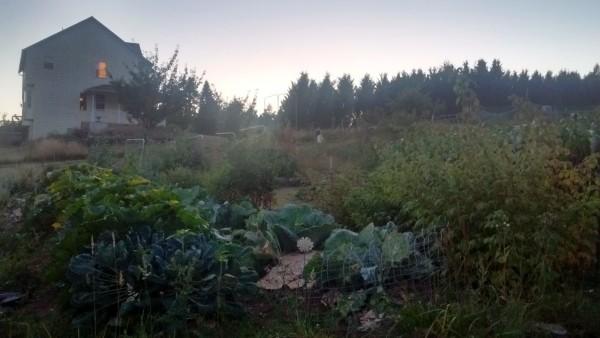Goodnight, little farm.